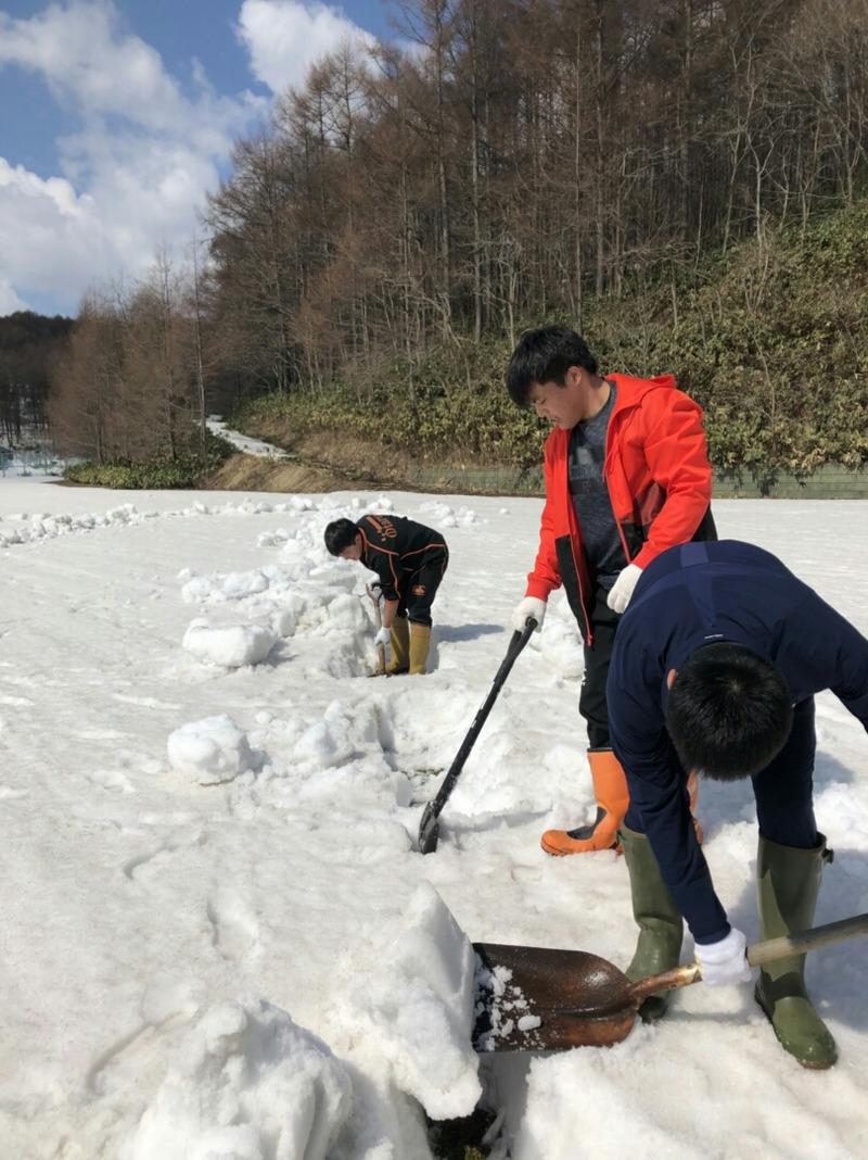 からまつ公園グラウンドの雪割り(小樽潮陵高校ラグビー部)